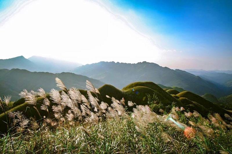 Mùa cỏ lau Bình Liêu