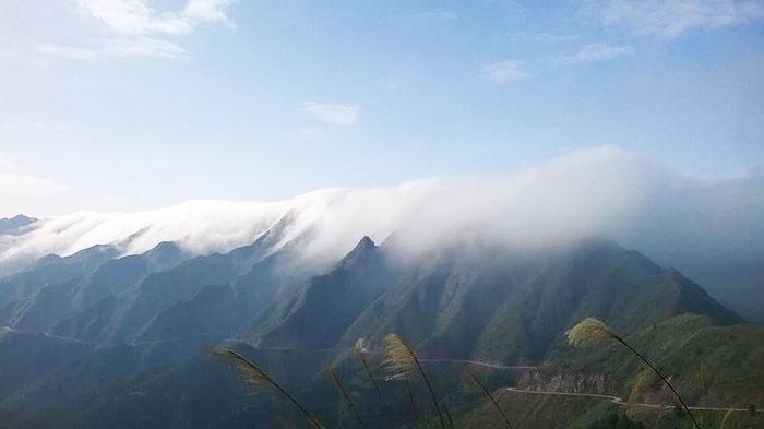 Săn mây Cao Ly ở Bình Liêu