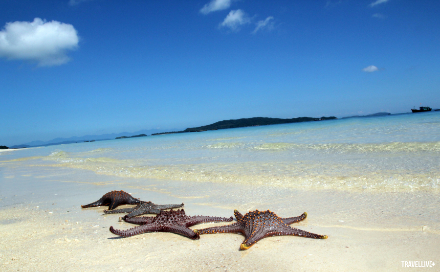 Sao biển ở đảo Cô tô