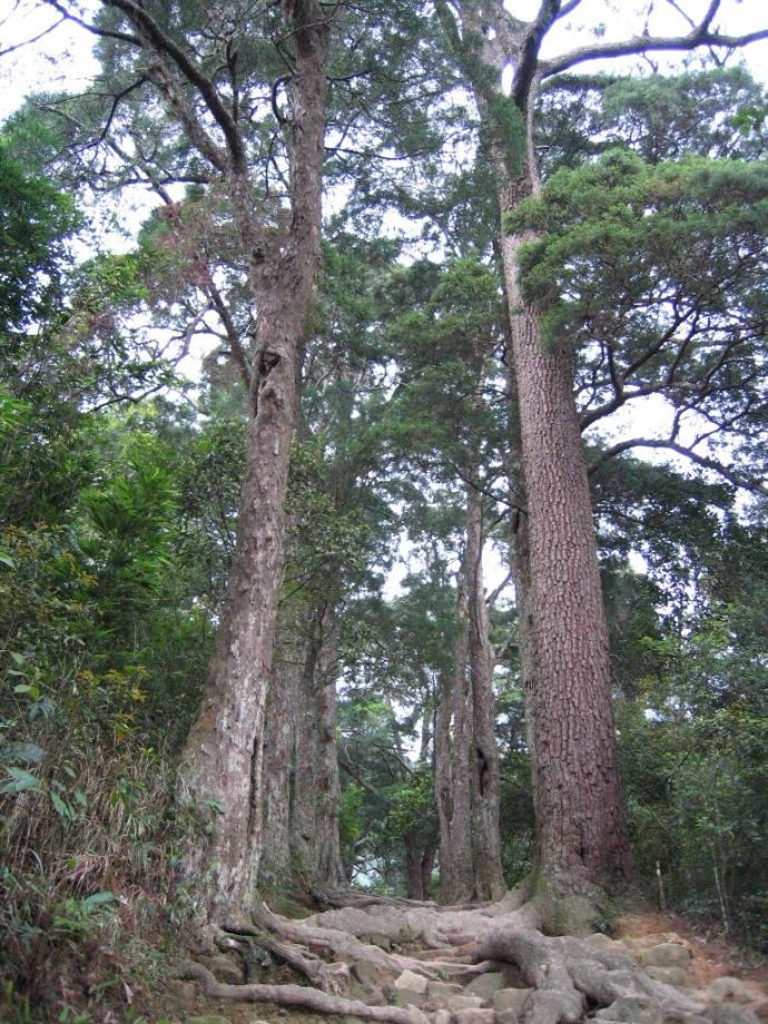 Am Lò Rèn, Đường Tùng, rừng Trúc và Hòn Ngọc