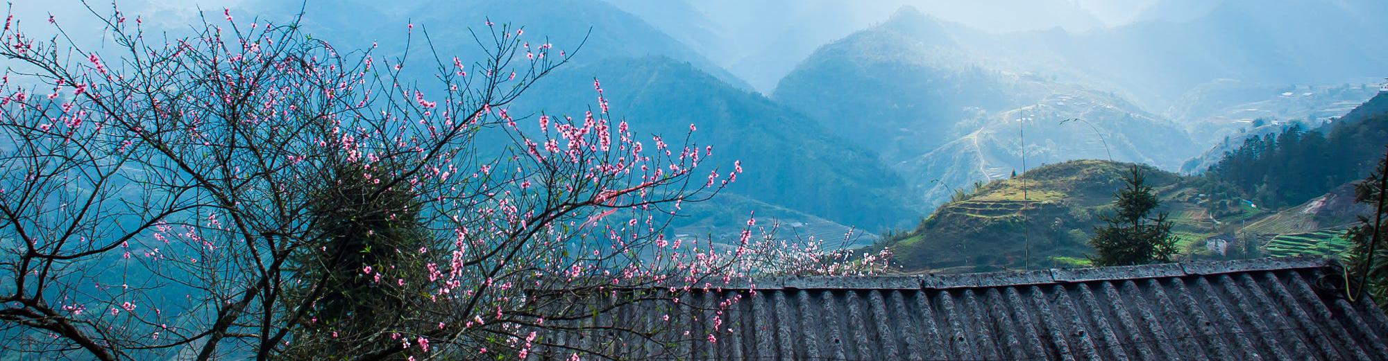 mùa xuân trên những mái nhà