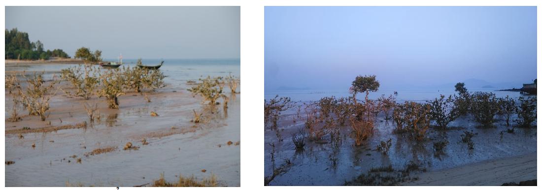 Bãi triều trên đảo Quan lạn